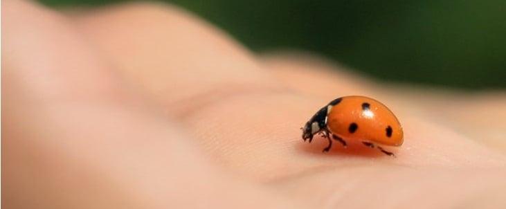 ladybug11